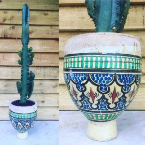 Pot et Cactus MDLO